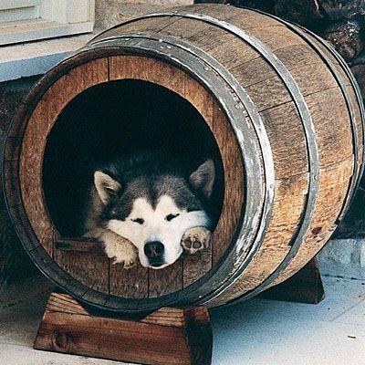 idea de casa de perro con barril